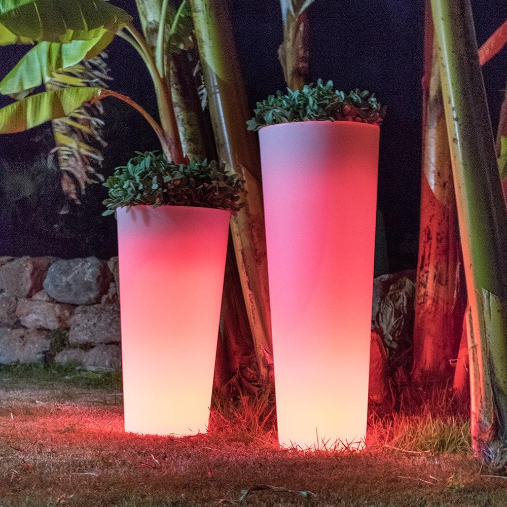 Licht-Trend Ficus leuchtender LED Blumentopf mit Akku und Fernbedienung 3