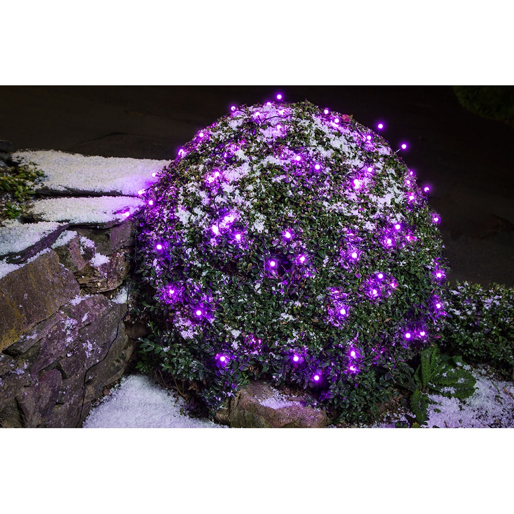 LED Globelichterkette runde Dioden 80 purpurfarbene Dioden IP44 5